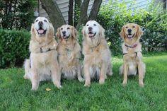 The LCC K-9 Parish Comfortable Dogs!