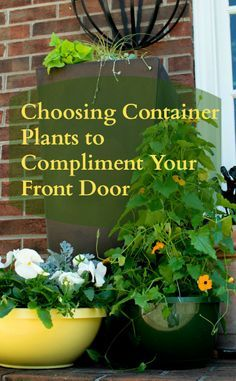 Container plants to compliment a bold blue door