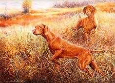 Vizsla's Hunting