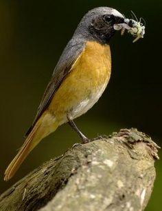 Birding Resources by the Fat Birder for Bird Song