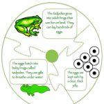 free frog, printabl set, frog activ, pond life, life cycl, life printabl