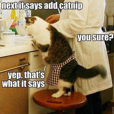 cat chef. lol