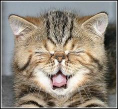 Celebrate Smile Week with a good belly laugh and kitty will help us do that!