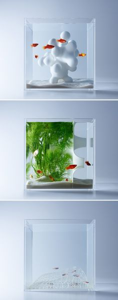 Minimalist Aquariums Filled With 3D Printed Flora by Designer Haruka Misawa
