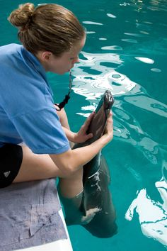Working with Winter at Clearwater Marine Aquarium.