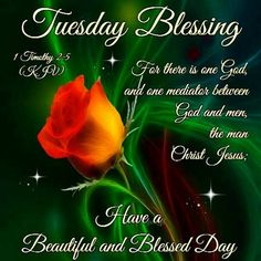 Happy Tuesday Good Morning I Hope Your Blessings Multiply Tuesday Images, Tuesday Pictures, Good Morning Tuesday, Good Morning Quotes, Morning Verses, Morning Pics, Happy Tuesday Quotes, Prayer Partner, Daily Scripture