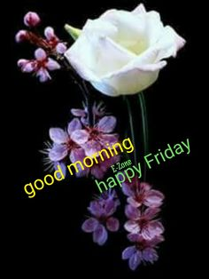 Good Morning Friday, Good Morning Quotes, Happy Friday, Morning Pictures, Flowers, College, University, Royal Icing Flowers, Floral