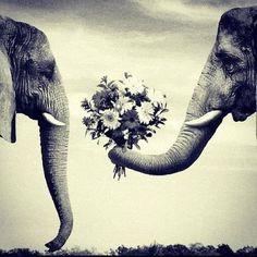 Animal love #elephants #chivalry
