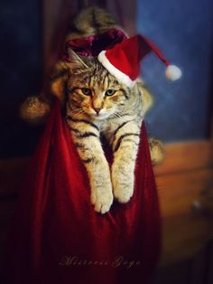 Where Cats Belong.....on Christmas Eve....and the rest of the year!  Oh, just kidding.  Love me some Kitty Cats!