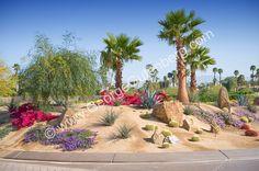 Desert Landscaping