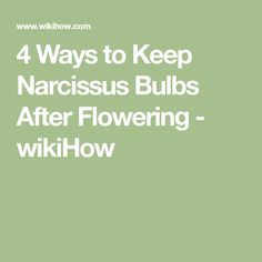 4 Ways to Keep Narcissus Bulbs After Flowering - wikiHow