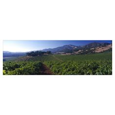 sonoma winery view