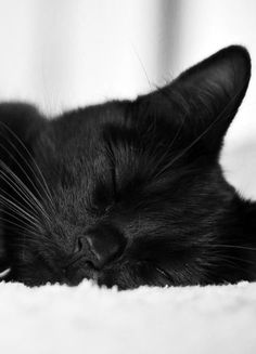 Black cat sleeping...