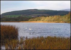 Permits from Easter Achnacloich farm. North Coast 500, East Coast, Brown Trout, Fly Fishing, Scotland, Mountains, Easter, Travel, Trout
