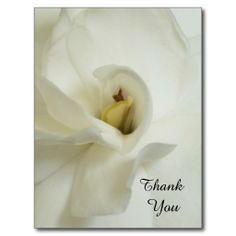 >>>Low Price          Gardenia Sympathy Thank You Postcard           Gardenia Sympathy Thank You Postcard today price drop and special promotion. Get The best buyThis Deals          Gardenia Sympathy Thank You Postcard Here a great deal...Cleck Hot Deals >>> http://www.zazzle.com/gardenia_sympathy_thank_you_postcard-239354126398324957?rf=238627982471231924&zbar=1&tc=terrest