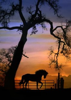 Horse, fence and tree silhouette against the sunset. Beautiful horse photography. Please also visit www.JustForYouPropheticArt.com for colorful inspirational Prophetic Art and stories. Thank you so much! Blessings!