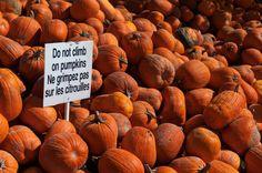 Sturgeon Falls, Ontario Spirit Halloween, Pumpkins, Ontario, Canada, Vegetables, Fall, Autumn, Pumpkin, Veggies