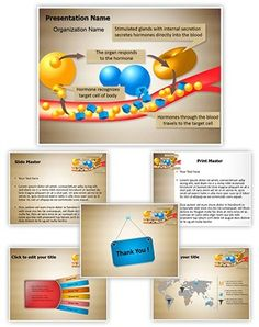 Hormone Glands Enzymes Point Presentation Template Is One Of The Best