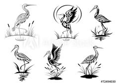 Stork, heron, crane and egret birds