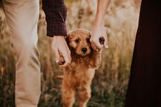 "Newly Engaged Couple Names Goldendoodle Puppy After a Dating App – The Reason Why is Adorable. - - ""As I moved in to love on the puppy, I noticed her new collar with a tag stating ""Will you marry my daddy? Puppy Pictures, Couple Pictures, Engagement Couple, Engagement Pictures, Photos With Dog, Dog Photography, Couple Photography Poses, Couple Shoot, Daddy"
