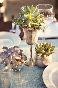 Succulents in a variety of antique silver vessels scattered the tabletops. Stephanie Williams Photography
