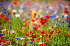 Field of spring flower by Akihiro Satoh on 500px