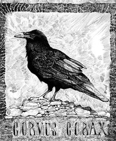"Love ALL the Textures!! ""Corvus Corax""  {don't know the Artist}"