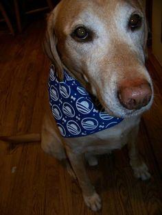 Looking dapper in an Obama 2012 bandana: http://OFA.BO/bAaTiR