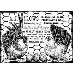 Chicken & Egg Vintage Ad♥♥