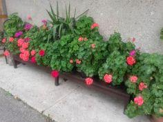 20 pieces Herbs, Plants, Herb, Flora, Plant, Planting