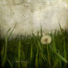 Jamie Heiden On the Shoulders of Giants | Flickr - Photo Sharing!