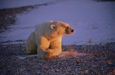 Breath of Light - Polar Bear - $355.00