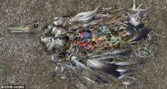 The litter in the oceans directly kills millions of aquatic animals annually