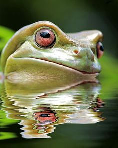 ~~NESSIE ~ frog portrait by risquillo~~