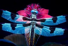 The magic of ultraviolet nature and macro photography - Dragon Mosaic by Don Komarechka - Barrie Ontario Canada