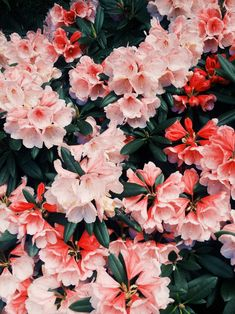 I like pretty things. Like flowers. Flowers are pretty. Flowers make me happy. My Flower, Wild Flowers, Beautiful Flowers, Summer Flowers, Tropical Flowers, Plants Are Friends, Flower Aesthetic, Mother Nature, Planting Flowers