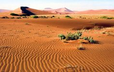 Namibia. Let's share a slice of Veldt bread right here, in the golden sand.