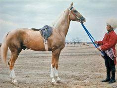 'Torture By Hunger': Horse Breeder Describes Desperate Days In Turkmen Prison