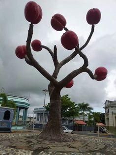 Yauco, Puerto Rico, la ciudad del cafe!!!