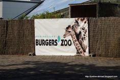 Pierwsze kroki w Nibylandii: Burgers' Zoo Burgers, Reusable Tote Bags, Hamburgers