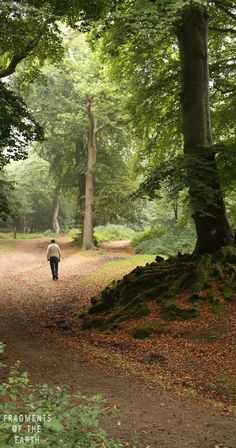 My dad walking in the New Forest England. England Ireland, England And Scotland, Hampshire England, Mystical Forest, British Countryside, New Forest, British Isles, The Great Outdoors, Travel Photos