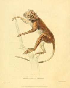 Zoological researches in Java, and the neighbouring islands / - Biodiversity Heritage Library