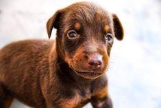 www.elitek-9.com  #doberman, #protectiondogs, #CEO, #militaryk9, #exotics Doberman Pinscher, Luxury Life, Exotic Cars, Labrador Retriever, Puppies, Dogs, Animals, Instagram, Labrador Retrievers