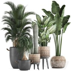 Urban jungle Indoor House Plants Palm House Plants Lawn Mower – Keep You Palm House Plants, House Plants Decor, Palm Plants, Balcony Plants, Potted Palms, Indoor Palms, Plantas Indoor, Deco Restaurant, Interior Plants
