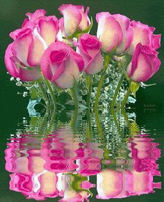 For Beautiful Friends. Flowers Gif, My Flower, Pretty Flowers, Pretty In Pink, Fire And Ice Roses, Good Morning Flowers, Water Reflections, Everything Pink, Beautiful Roses