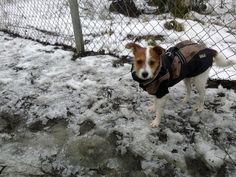 Icy dog park