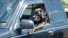 Dogs that think theyre people (30 Photos)
