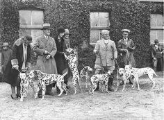 Vintage Photograph Dog Show Dalmatians