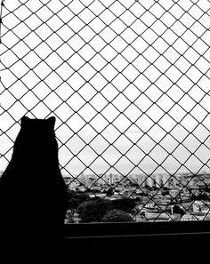 Black cat. Pet.