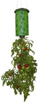 Embellish: {tutorial} Upside-Down Hanging Tomato Plant